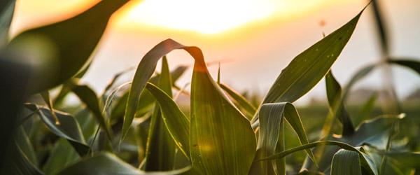 GMO Labelling Rules: Canada vs USA